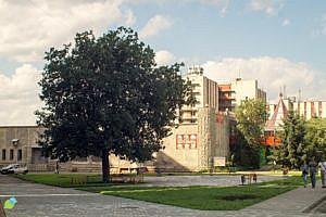 Дуб памятник в Челябинске